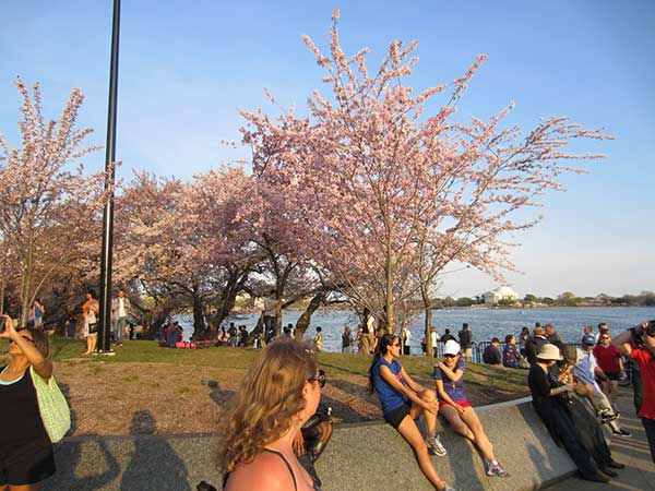 The crowds around the tidal basin to see the cherry blossoms