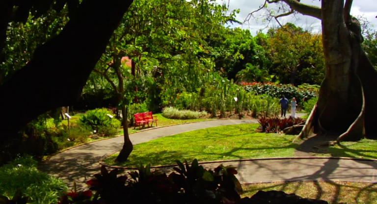 Lush and lively gardens in Deshais in the Guadeloupe Islands