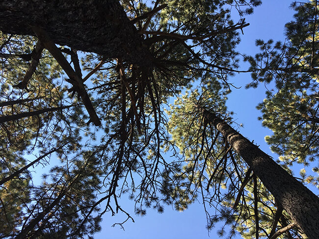 forest-nm-mount-taylor-cdt-5215570