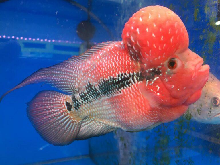 goldfish-market-hong-kong-1024x768-2173386