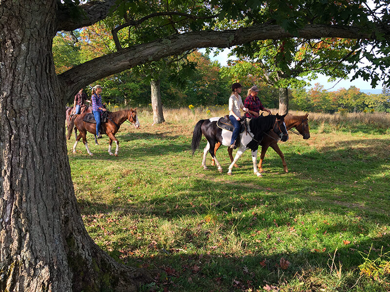 horse-riding-finger-lakes-national-forest-1056509