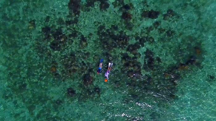 martinique-snorkeling-darley-8563246