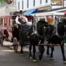 Horse Drawn Carriage in Michigan's Upper Peninsula