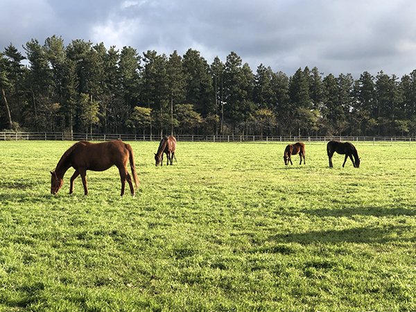 Horses on Jeju Island