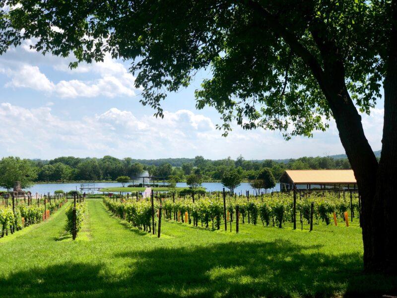 Views of Old House Vineyard